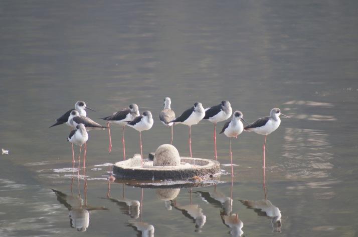 Shipra River Ujjain