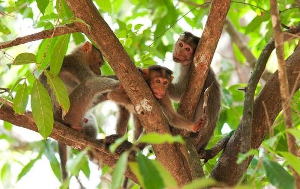 Cotigao Wildlife