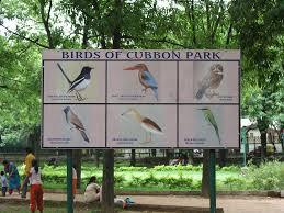 Birds in Cubbon Park Bangalore
