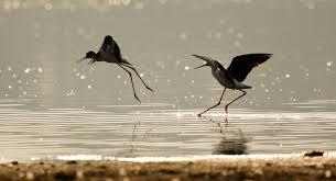 Birds at Hebbal Lake Bangalore