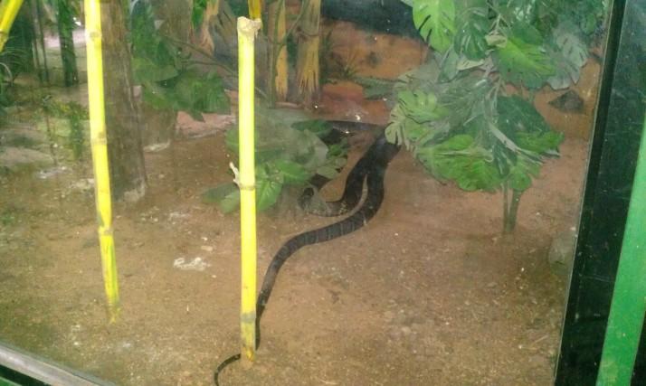 Rajiv Gandhi Zoological Park