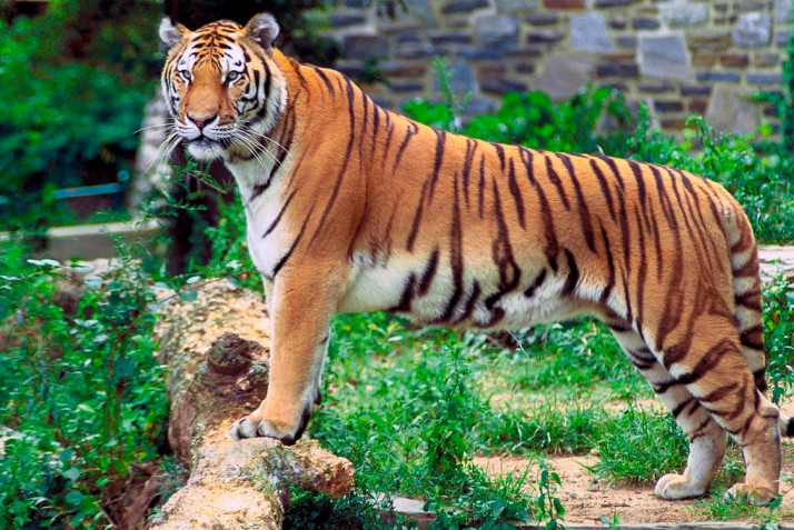Kalakkad Mundanthurai Tiger Reserve Kanyakumari