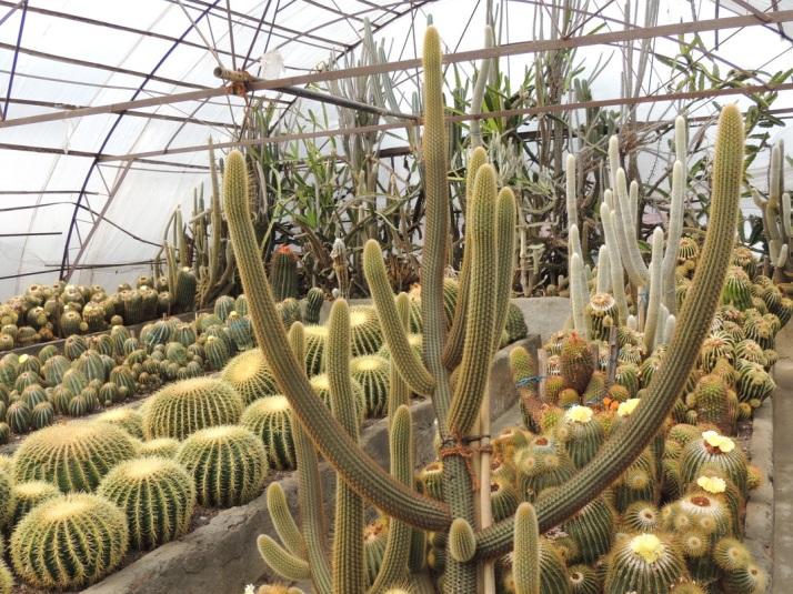 Cactus Garden Bhubaneswar