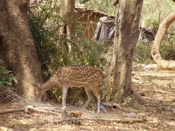 Deer at National Park