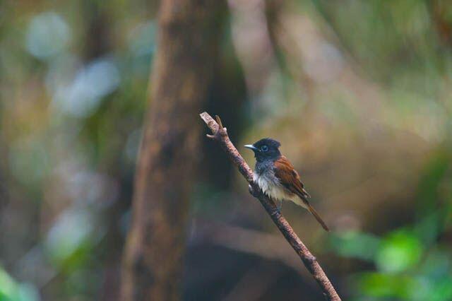 Karnala Bird Sanctuary Mumbai
