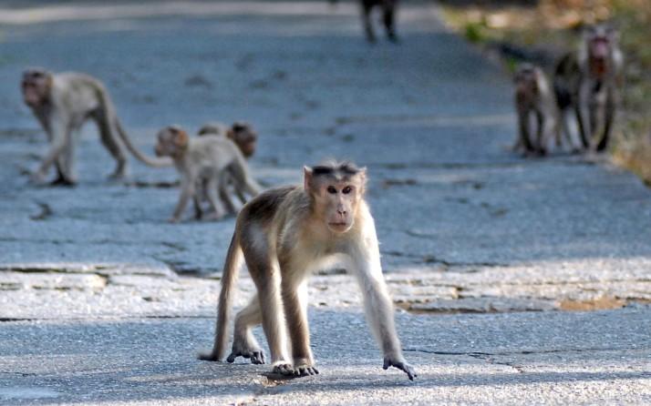 Monkeys at Park